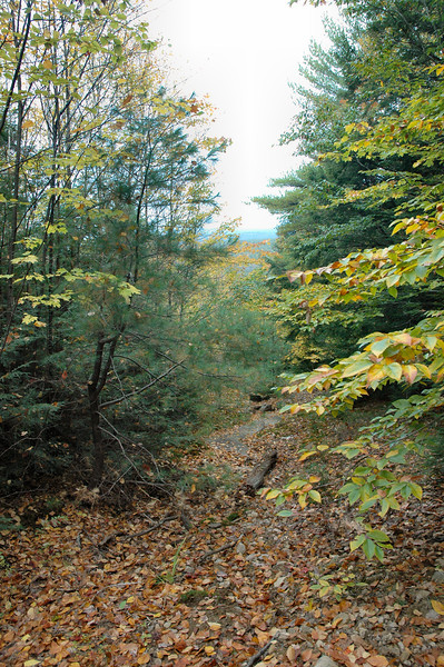 On the Ring trail: a glimpse down a stream bed to the White Mountains