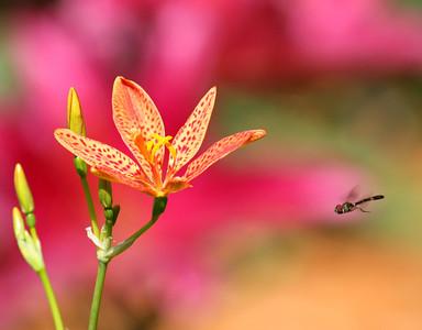 Bee Killer