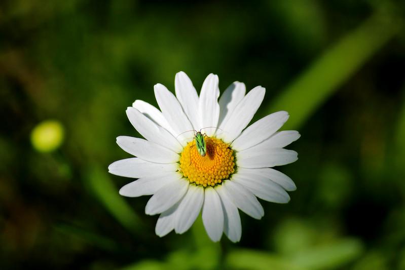 Minnesota Miridae