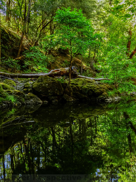 Pool along Lagunitas Creek