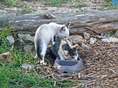 12   Oh yeah, sorry!  062810-17 Kittens (Cody & Callie)