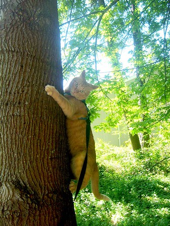 Sweetie, Tree Hugger