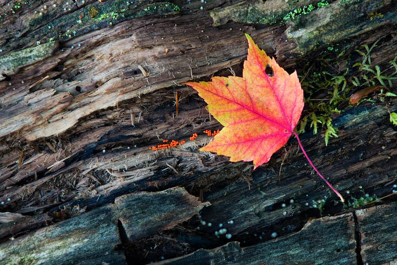 Leaf on log.