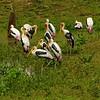 Day 7. Painted Storks @ Udawalawe