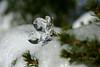 Crystal and Ice-II