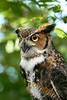 Owls 08-23-2008