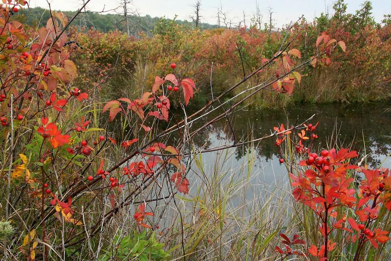 """""""Fall Starts"""", Finzel Swamp"""