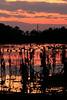 Sunset - Blackwater NWR - III