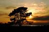 Sunset - Assateague Island