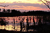 Sunset - Blackwater NWR - IV