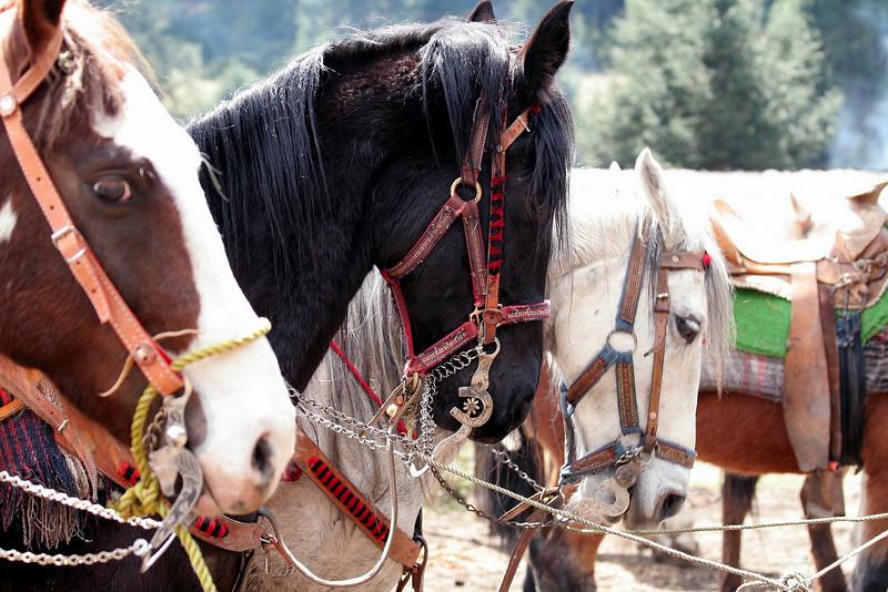 Mexico - The Horses of Sierra Chincua
