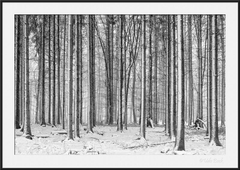 Forest in Leinfelden
