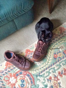 Swiffer loves shoes.