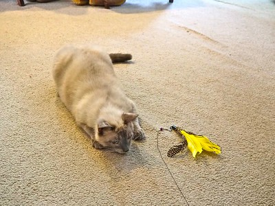Turk laid claim to the yellow feather.
