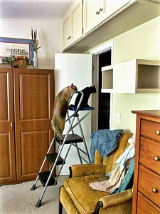 "Cats On A Ladder - ""Where to next?"""