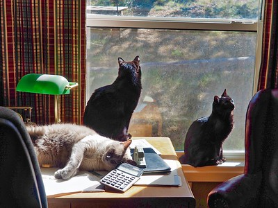 Cats in Sunlight on Desk