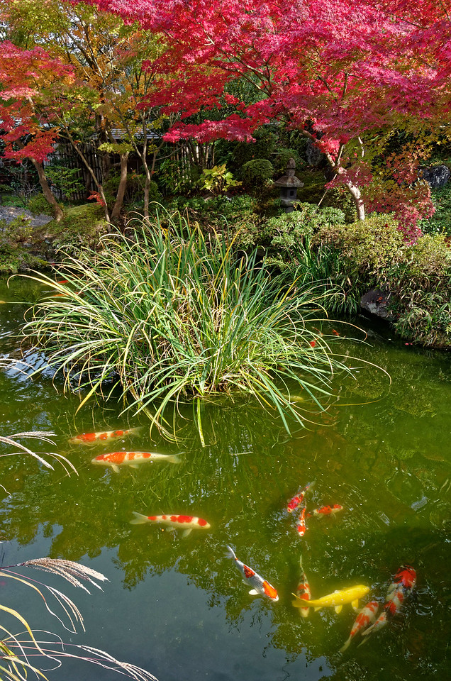 A koi pond is part of the garden.