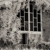 Chapel at abandoned Forest Haven Asylum - a sepia-color infrared image