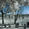 Wide view of headstones at Arlington National Cemetery - a false-color infrared image