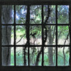 Tree branches through window of abandoned Forest Haven Asylum - a color image