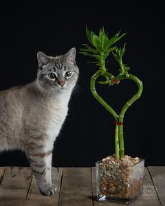 CatsBamboo3