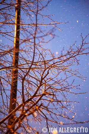 Snow Tree #2