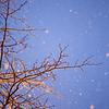 Snow Tree #1