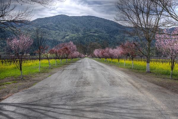 Napa Vineyard Road