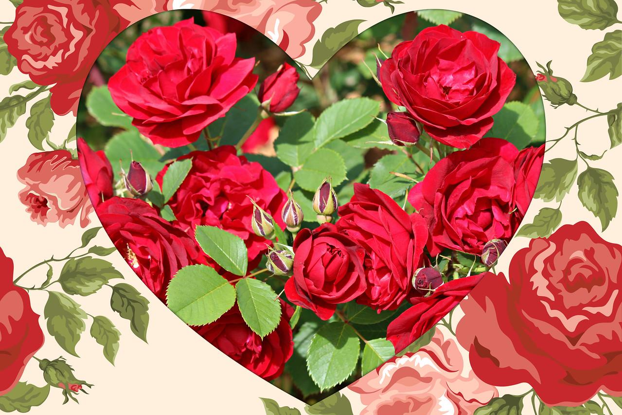 Grandiflora Love