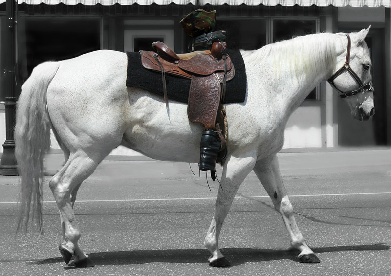 Caparisoned Horse