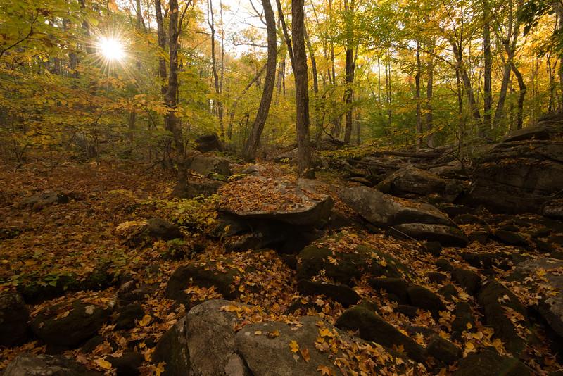 Purgatory Brook, Autumn Afternoon