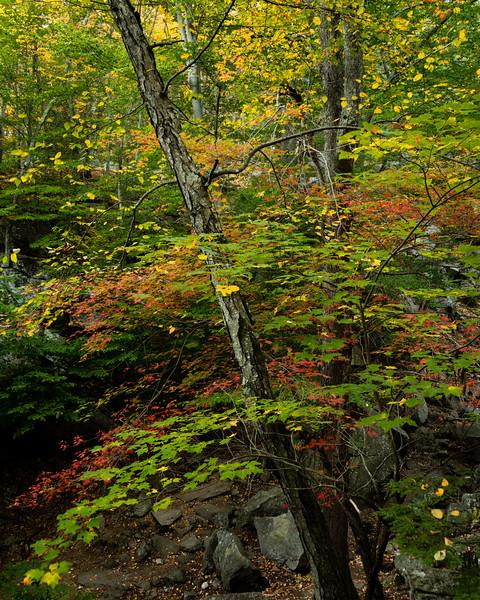 Early Autumn, Purgatory Chasm