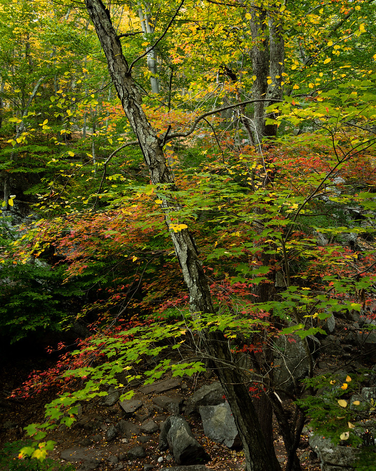 Early Autumn, Purgatory Chasm