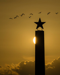 CRV_0957 7-17 Lone Star with birds vertical