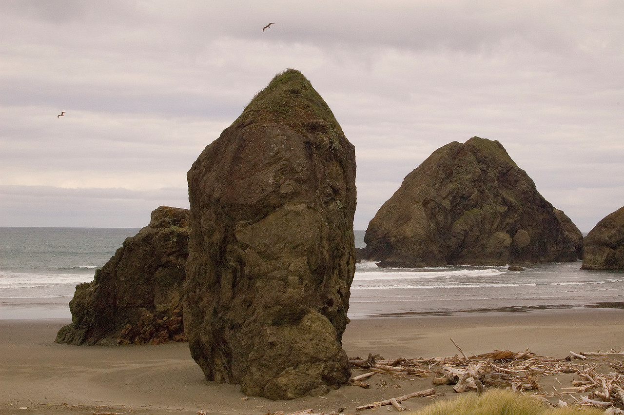 Southern Oregon coastline.  From a time when tides were tides and large cedars shuddered.
