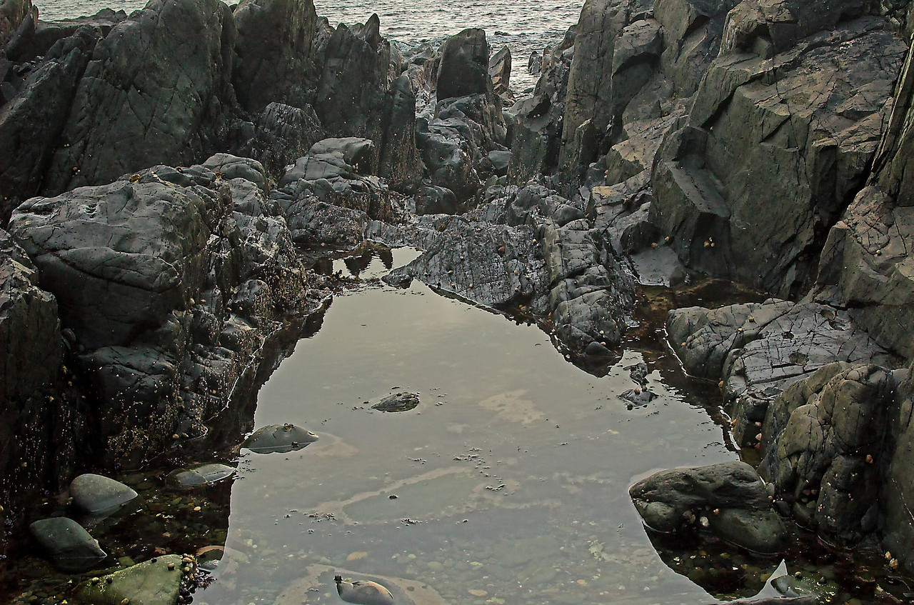 Tide pool on the west coast of Scotland.