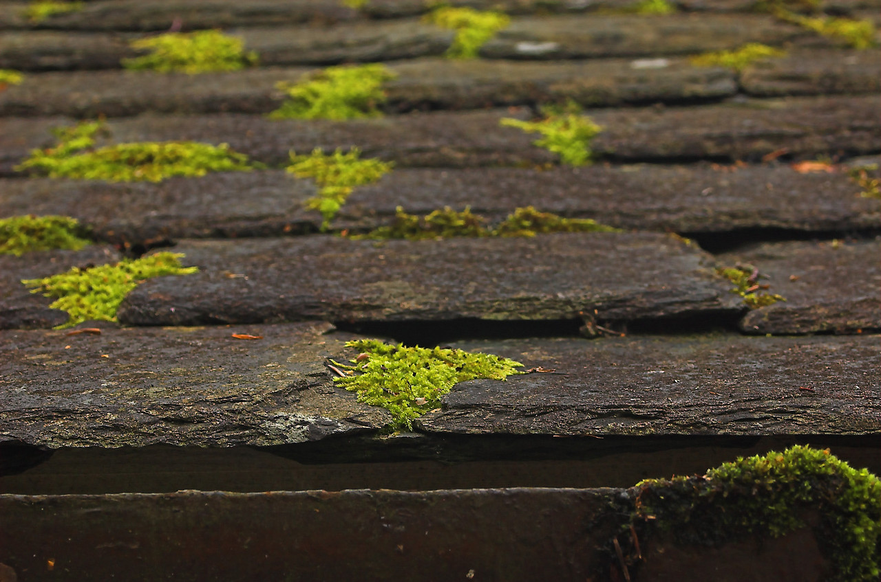 Licehn on slate roof.  This is the original roof for the wool shed at Castle Cawdor.  It is incredibly well preserved, yet shows the centuries of wear.