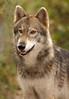 Wolf 3974