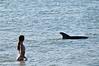 Dolphin 675