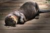 Otter 106