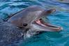 Dolphin9032
