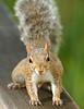 Squirrel 1990