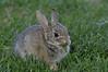 Bunny3561
