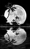 Supermoon and palms 2016 reflection 18x45 BW