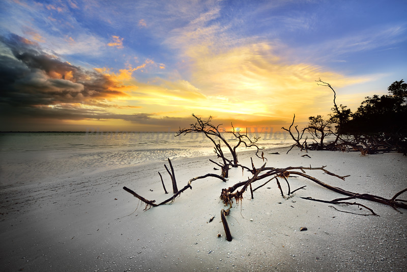 Sanibel sunrise 804