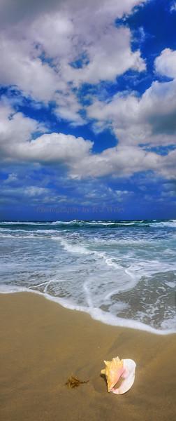 Shell on beach 2570 a