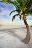 Beach Palm 3665a
