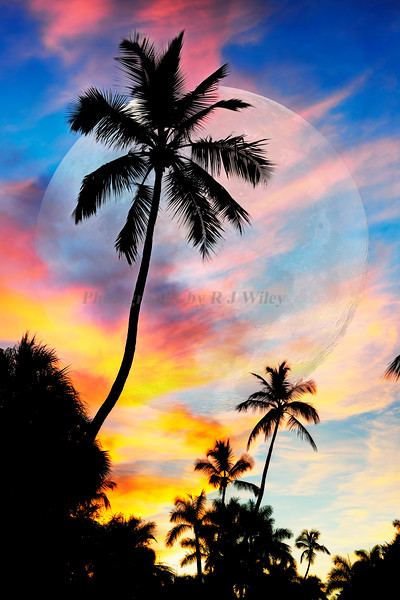 Super Moon Sunrise Palm trees 423 color