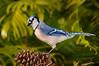 Blue Jay 5397
