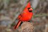 Cardinal 1789